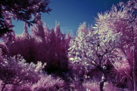 infrared world