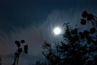 luna llena en la pardala