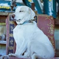 cayito, the boss